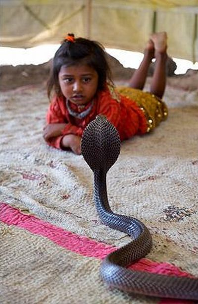 Very small snake charmers (15 pics)