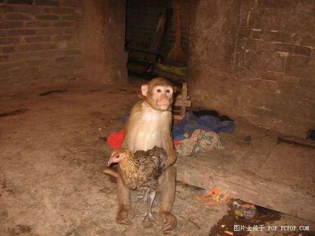 Monkey has found a friend (5 pics)