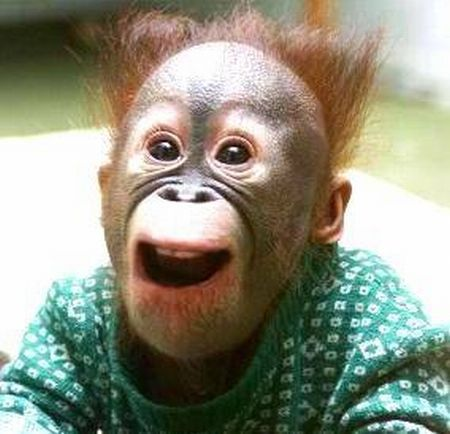 The most popular monkey haircuts for the summer (15 pics)