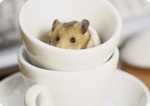 Animals that fit in a cup (10 pics)