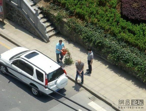 When people in expensive cars steal roadside flowers! (7 flowers)
