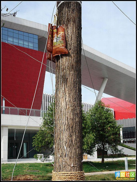Proper tree maintenance (14 pics)