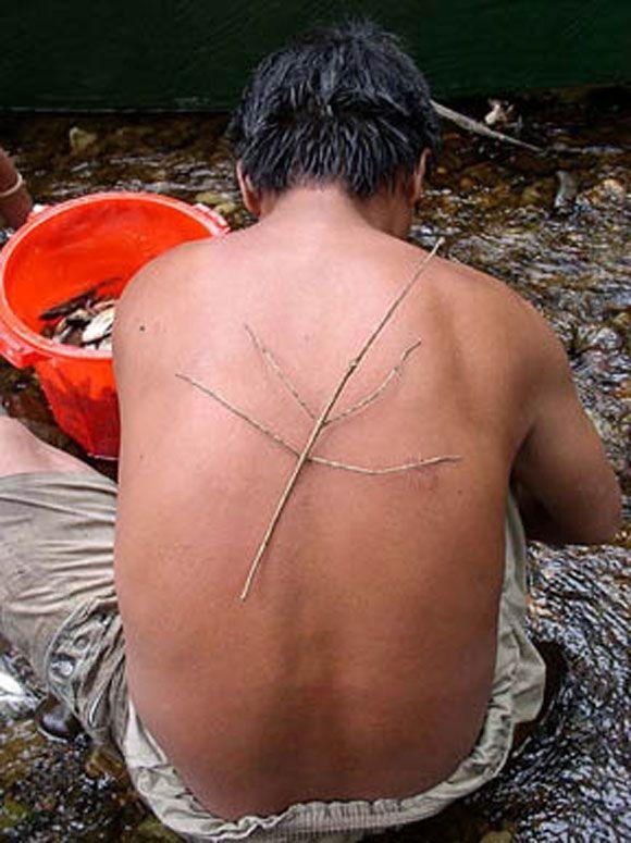 Living sticks ;) (10 pics)