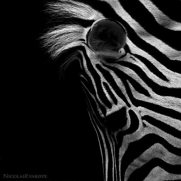 Dark Zoo by Nicolas Evariste (27 photos)