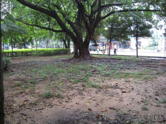 Huge tree roots (11 pics)