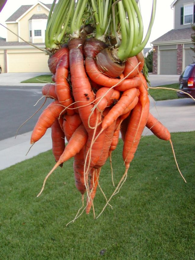 Tangled vegetable (5 pics)