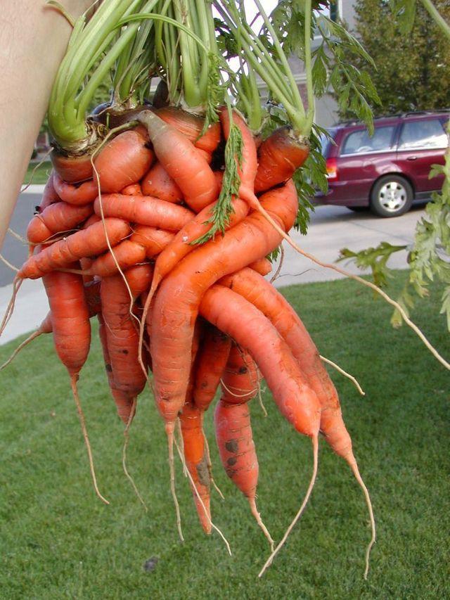 Tangled vegetable (5 pics)