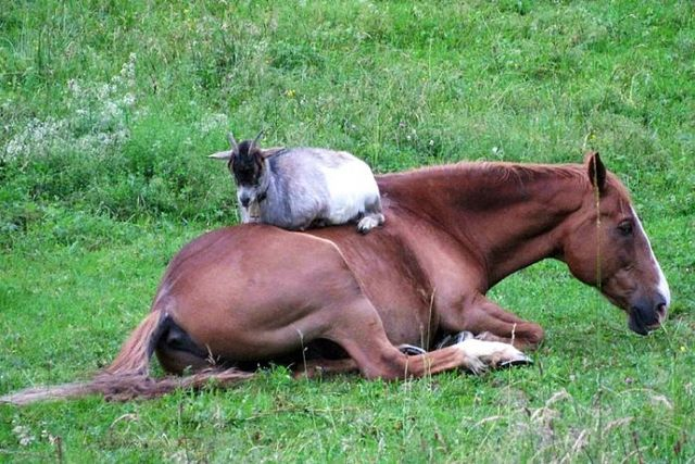 These funny animals (48 pics)