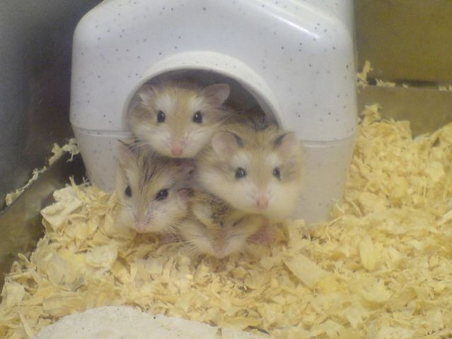 Super positive emotion of the day – little hamsters ;) (33 pics)