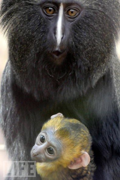 1 Monkeys are really funny and very expressive (26 pics)