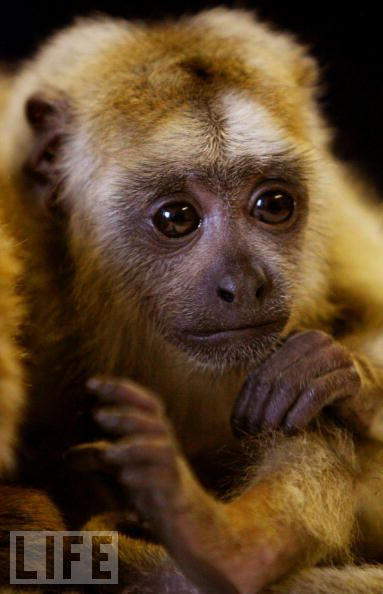 Monkeys are really funny and very expressive (26 pics)