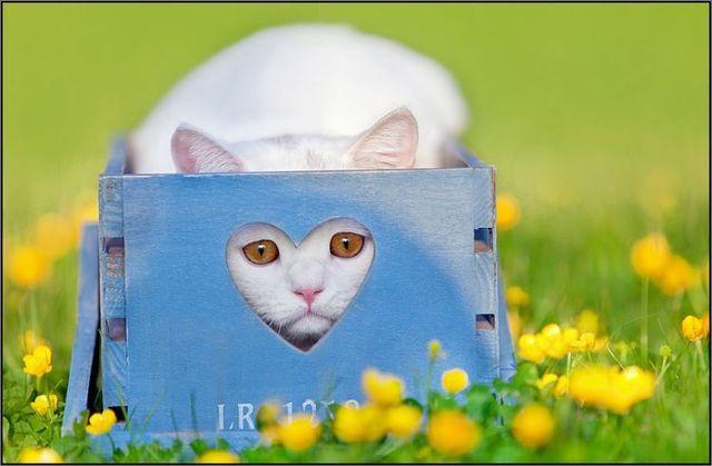 Portrait photos of cats (37 photos)