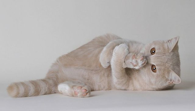 Portrait photos of cats (37 photos)