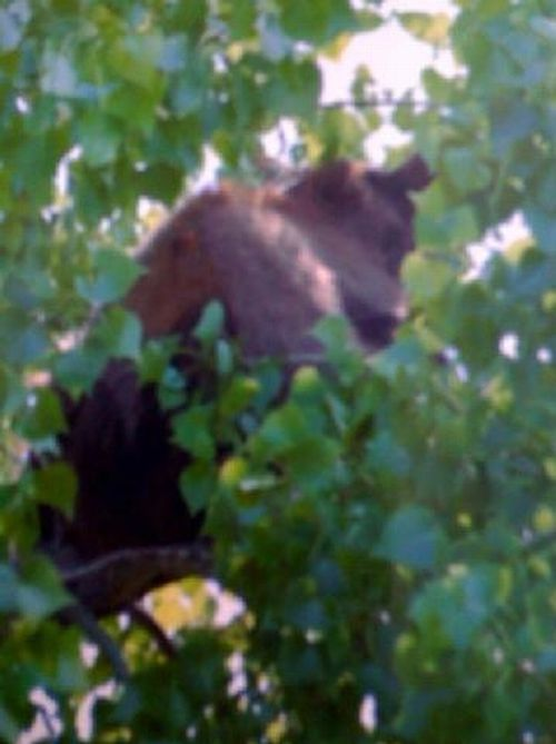 Bears and trampolines (7 photos + 1 video)