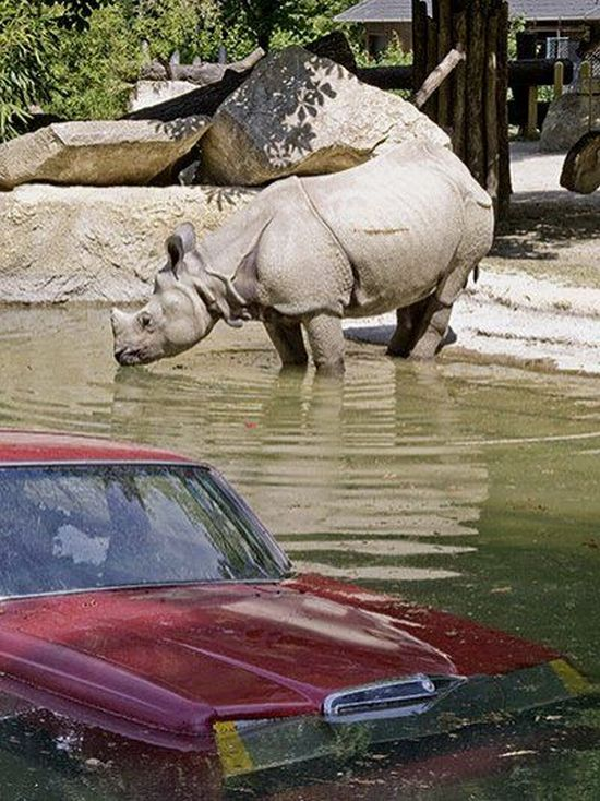 Nature in danger (9 pics)