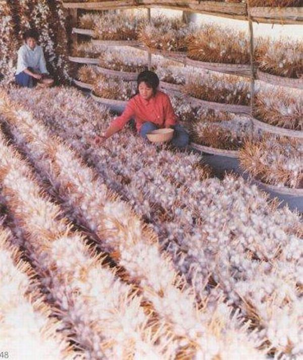 The process of silk-making (13 pics)