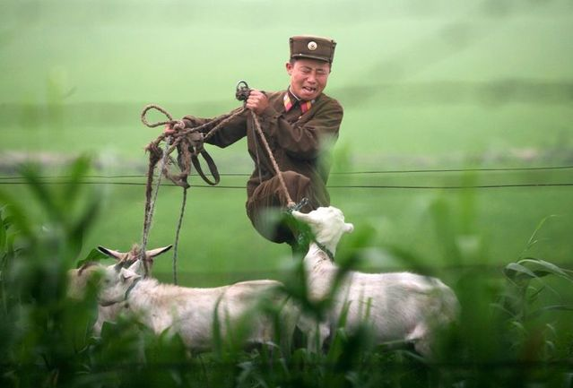 One morning in a North Korean village (3 pics)