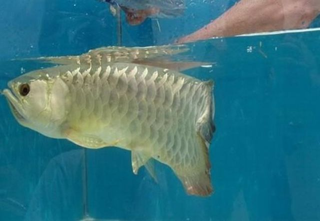 A very unusual fish (5 pics)