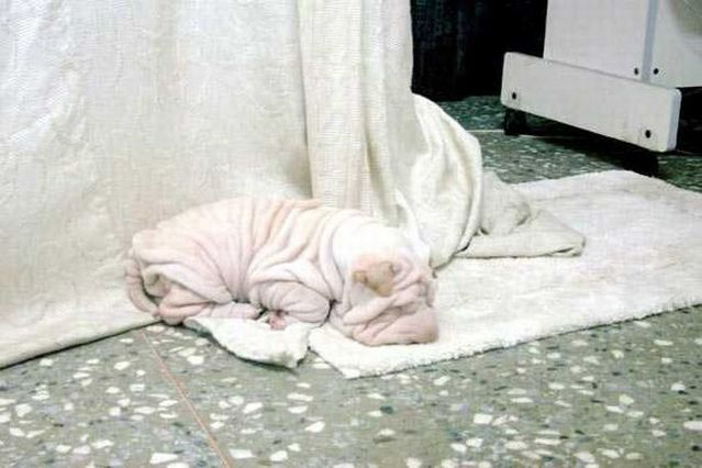 A good oldie. Cap and a towel )) (7 pics)