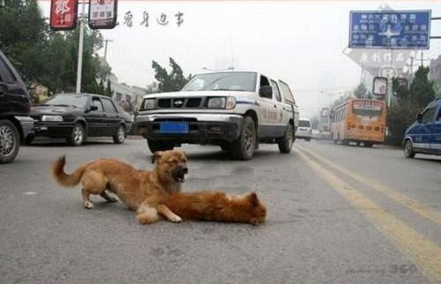 A sad story on the road. Indescribable emotions (15 pics + 2 videos)