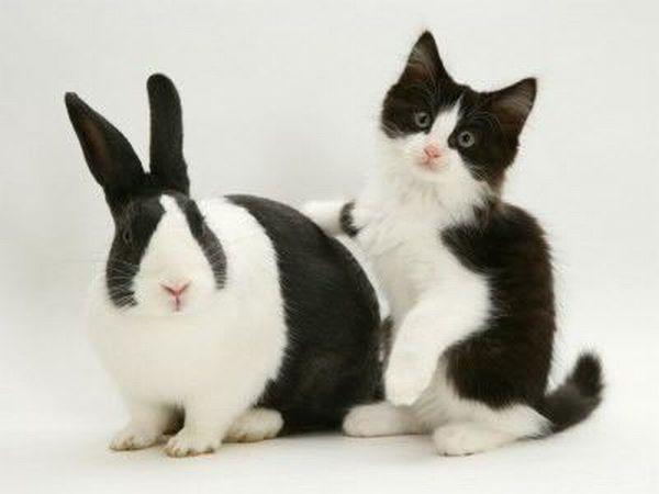 The look-alikes among animals (17 pics)