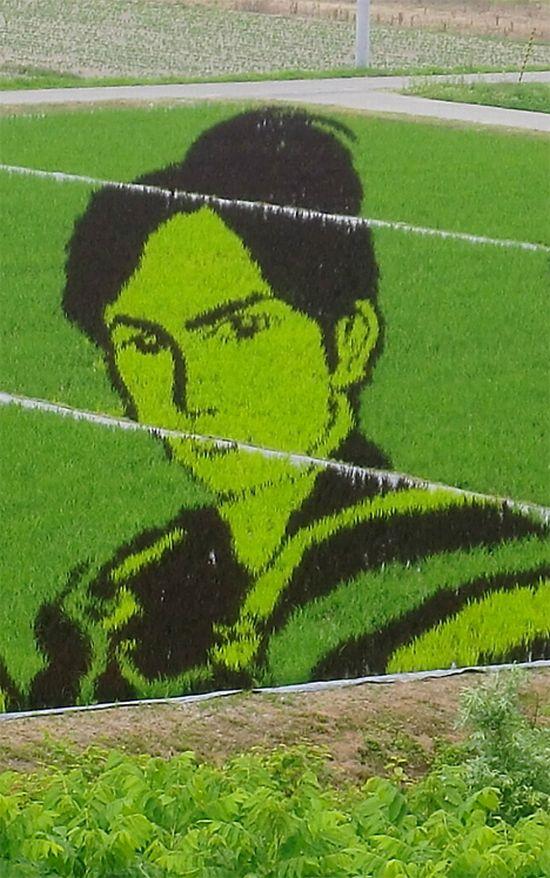 Amazinz rice paddy crop art (14 pics)