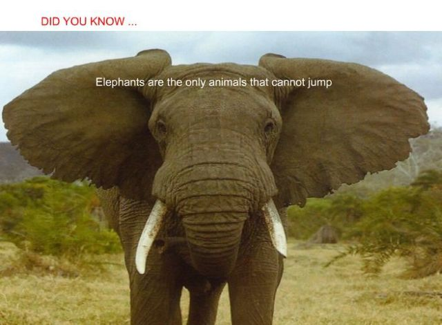 Did you know? (24 pics)