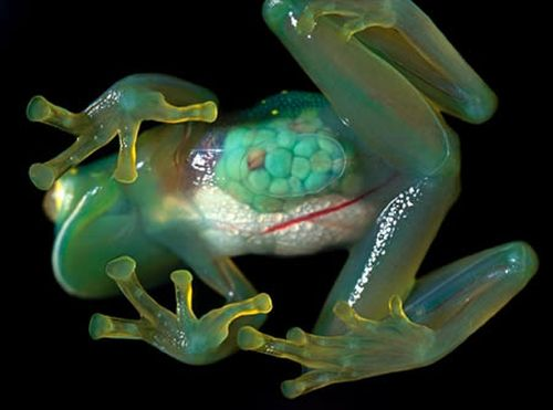 World's most beautiful transparent animals (10 pics)