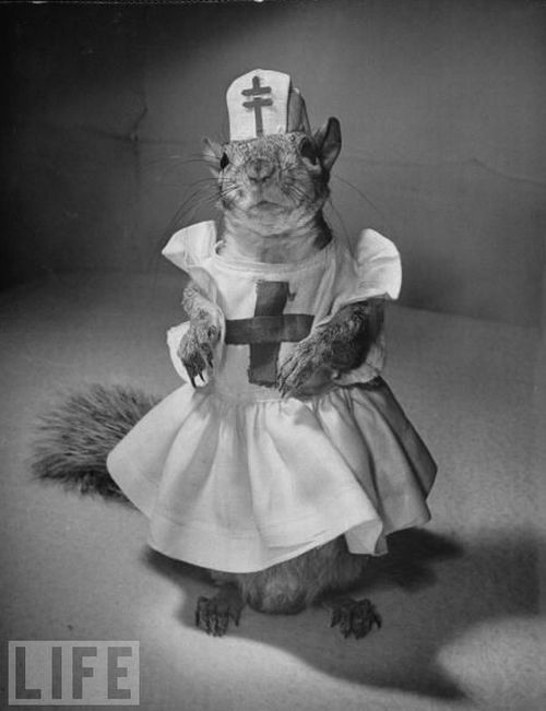 Fashion with a squirrel in the 40s (14 pics)