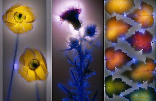 Unique photographs by Robert Buelteman (15 pics)