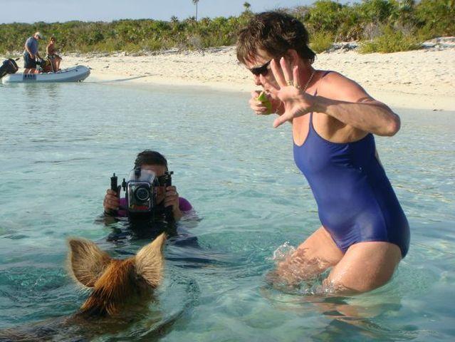 Swimming pigs (18 pics + 1 video)