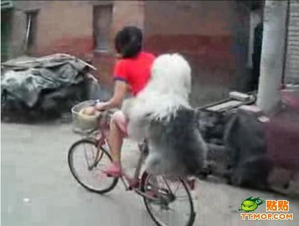 Doggy likes to ride (5 pics)