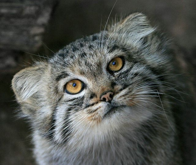 cute cat with big - photo #37