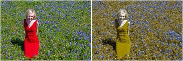The colors through the eyes a color blind person (12 pics)