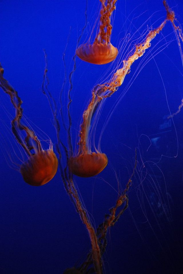 Compilation of 'beautiful' jellyfish (30 pics)