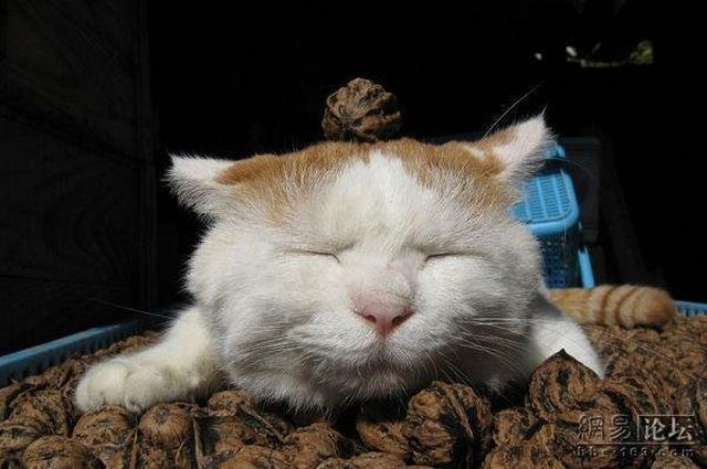 Cat who's always asleep (20 pics)