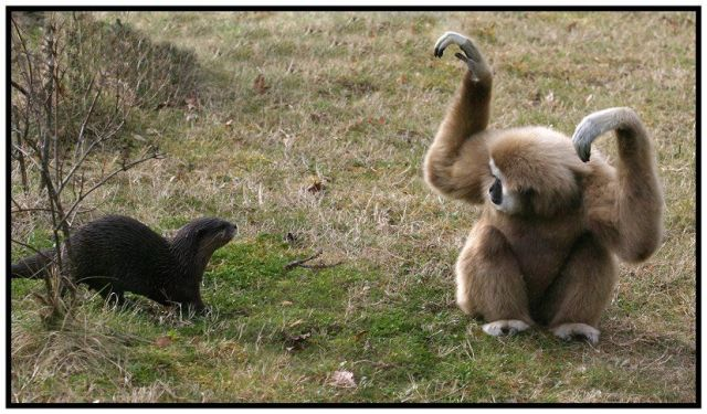 These funny animals (41 pics)