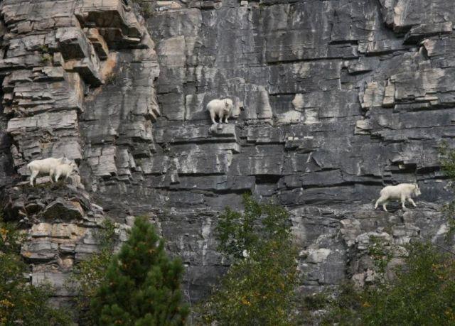Rock climbers (5 pics)