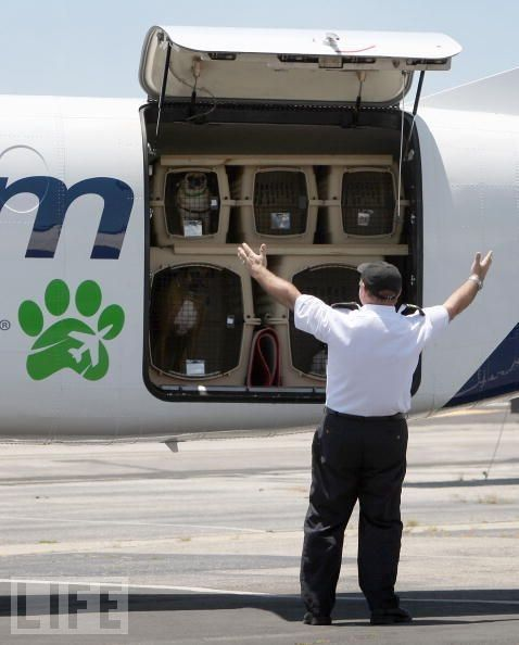 Pet Airways - Airlines for pets (13 pics)