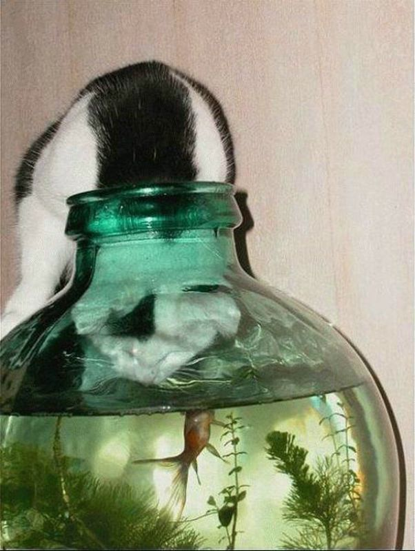 These funny animals (42 pics)