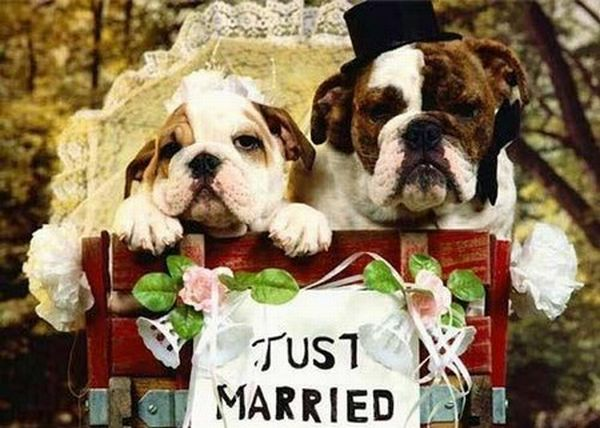 Pet weddings (23 pics)