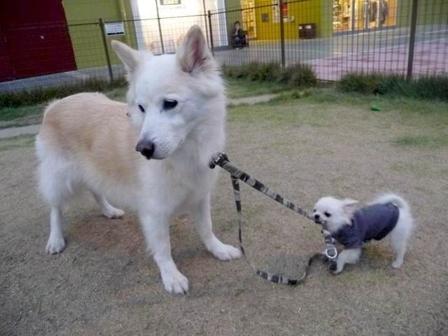 These funny animals (37 pics)