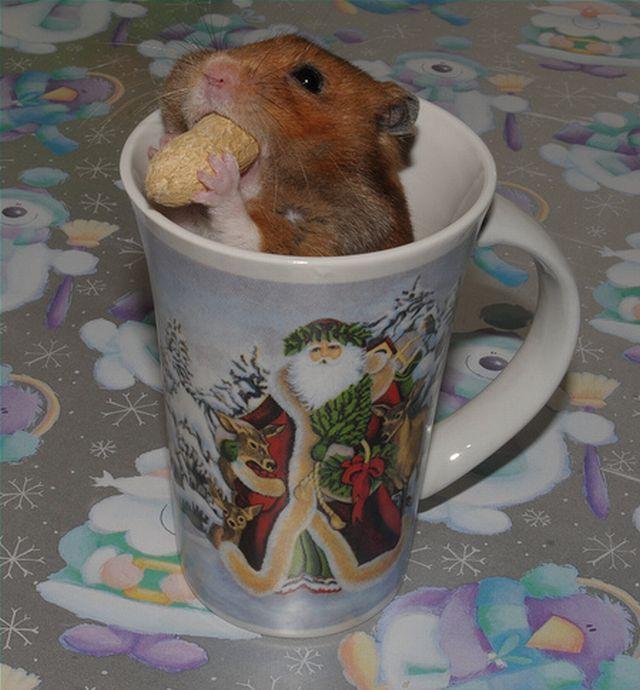 Greedy hamster (8 pics)