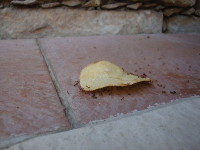Ants and chips (21 pics)