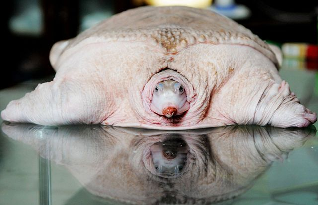 Strange animals (39 pics)