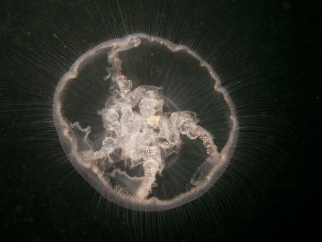 Another jellyfish compilation (38 pics)