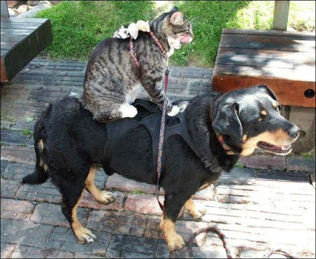 About the relationship of cats and dogs (55 pics)