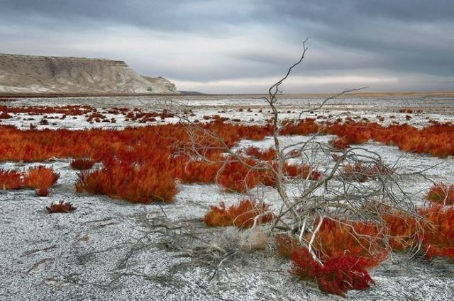 Dying Aral Sea (18 pics)