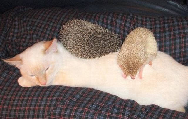 These funny animals (51 pics)