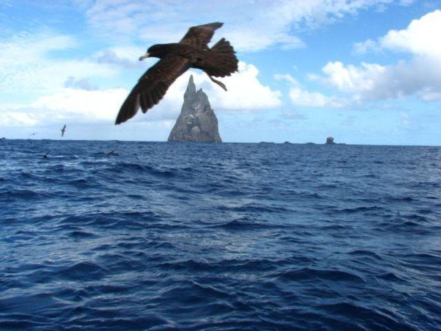 Ball's Pyramid (13 pics)
